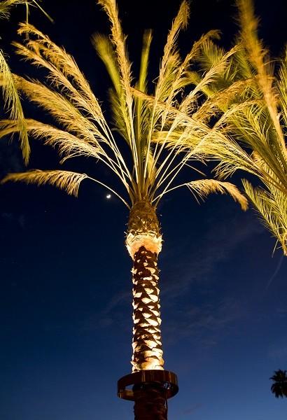 stella led palm tree light  u2013 bradley lighting