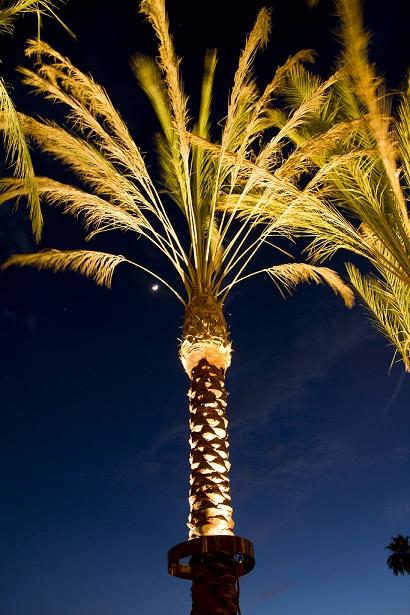 Stella Led Palm Tree Light